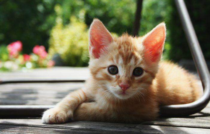 HAWS cancel for kitten shower