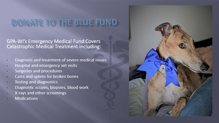 Text about what blue fund covers, and image of brindle greyhound with a blue ribbon